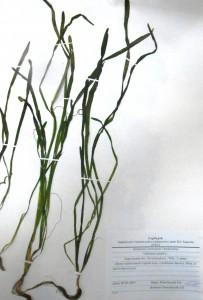Колекції рослин флори України